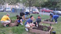 Por qué se debe enseñar jardinería en las escuelas